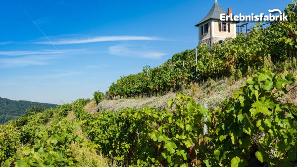 Weingenuss auf schmaler Spur in Radebeul